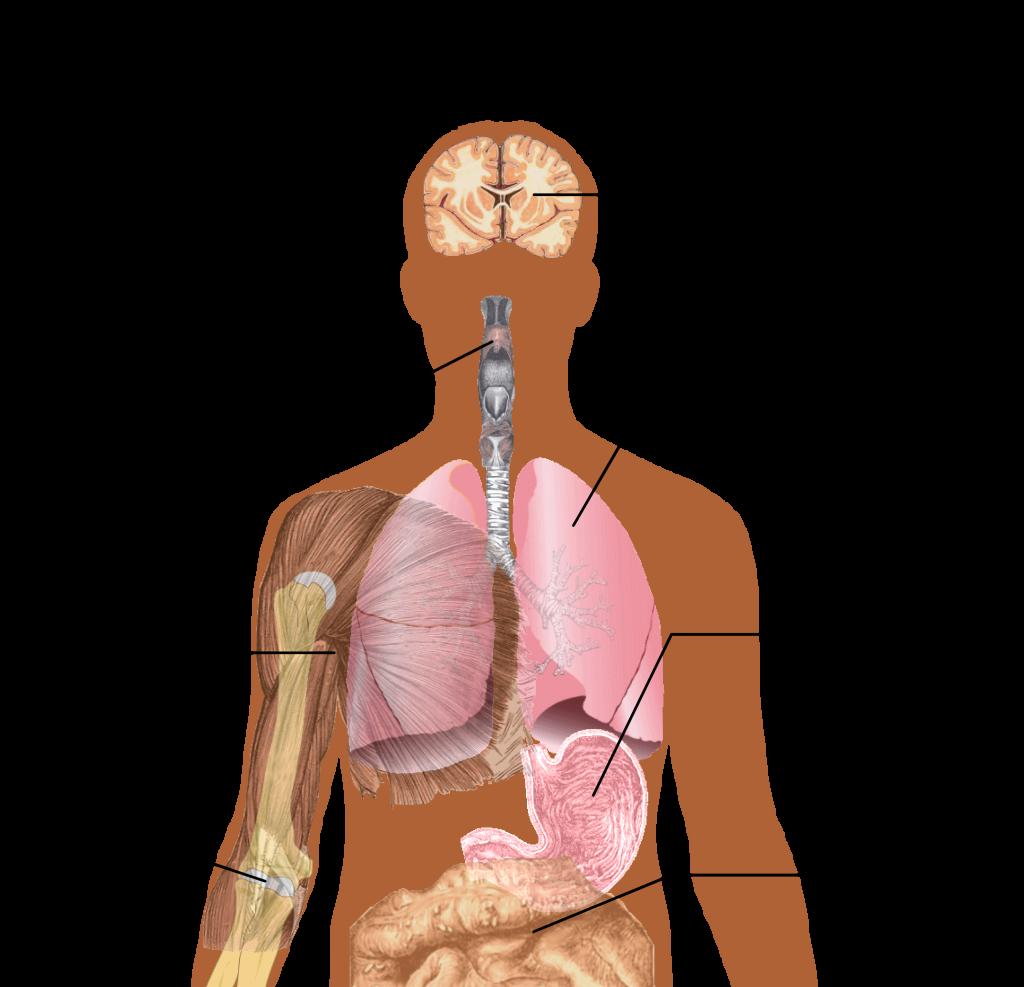 Symptoms_of_swine_flu